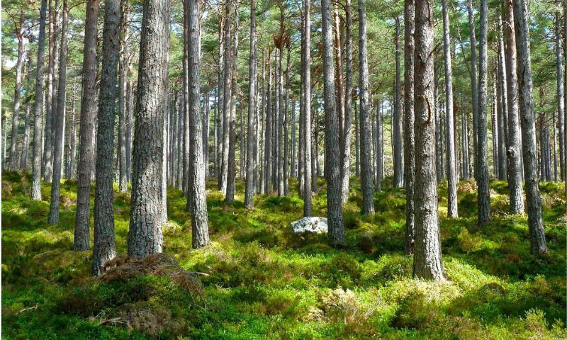 zielony las