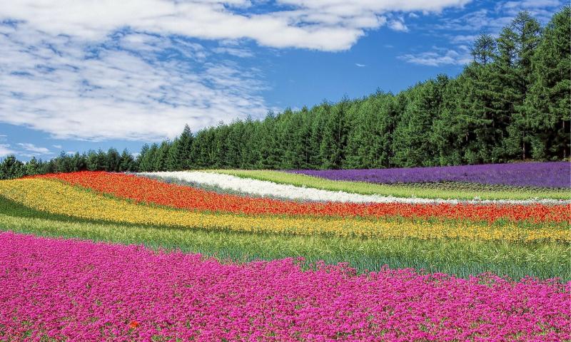 pole kwiatów